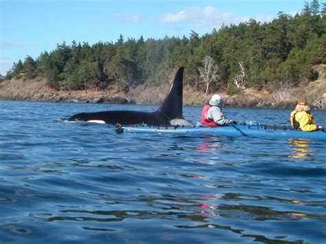 favorite   places  kayaking  washington state