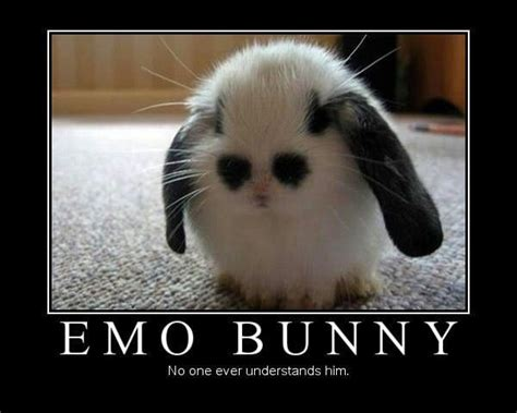 emo images  pinterest true words  quotes