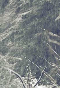 gif snow pretty winter beautiful peaceful forest december ...