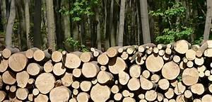 Kubikmeter Berechnen Holz : 100 kubikmeter holz 1 arbeitsplatz ~ Yasmunasinghe.com Haus und Dekorationen