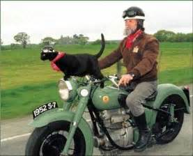cat on motorcycle 301 moved permanently