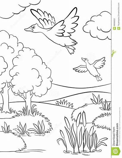 Coloring Pages Forest Lake Grassland Ducks Grass