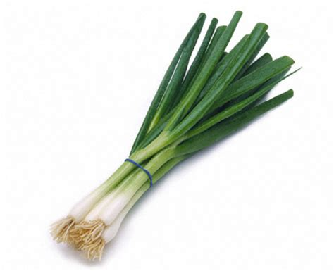 what are scallions scallion cor