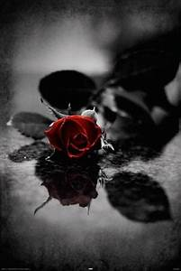 244 best images about Gothic Roses on Pinterest   Dark ...