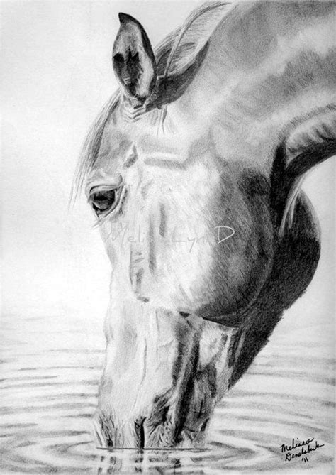 realistic animal pencil drawings art pencil