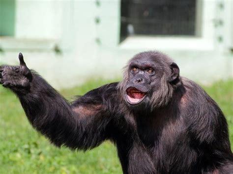 smart monkey barnorama