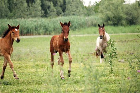 teeth born horses facts
