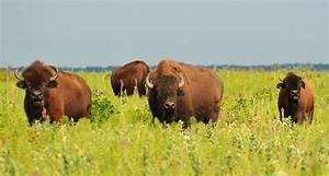 Wildlife In The Temperate Grasslands U2019 Diverse Or Abundant