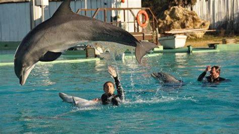 safari port st pere port p 232 re une manifestation contre la captivit 233 des dauphins