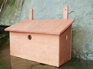 How to build a bird box for house sparrows