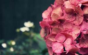 Cool Pink Flower Backgrounds | wallpaper, wallpaper hd ...