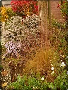 Garten Ohne Gras : schmales hohes gras gesucht seite 1 gartengestaltung mein sch ner garten online ~ Sanjose-hotels-ca.com Haus und Dekorationen