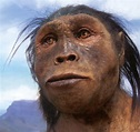 The 7 Homo Species Close to Present Humans That Existed on ...