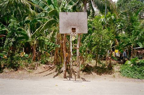 lost hoops palm tree basketball backboard