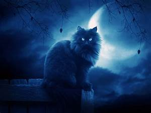 black cats images Black Cat HD wallpaper and background