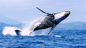 Le Peuple Des Baleines Terre Nouvelle