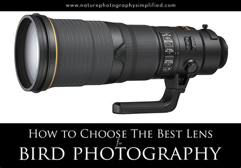 Best Lens For Bird Photography For Beginners And