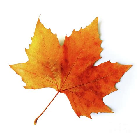 Image result for leaf autumn