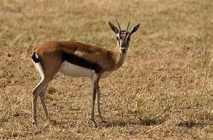North Tanzania - Mammals - Part 4