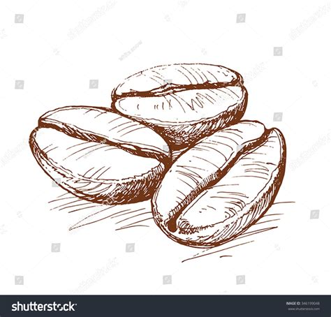 The coffee seeds are a seed added by actually additions. Painted Coffee Beans Sketch Vector Drawing Stock Vector 346199048 - Shutterstock
