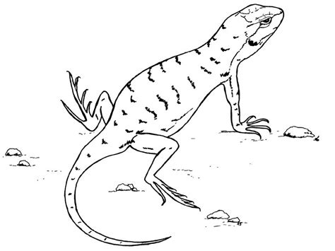 Coloring Page Lizard - Eskayalitim