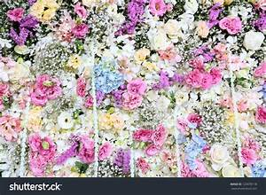 Beautiful Real Flower Background Wedding Backdrop Stock ...