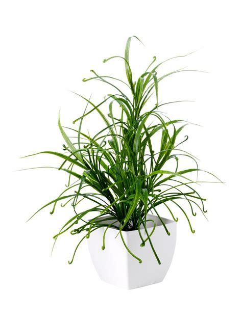 plante verte artificielle pot blanc carr 233 helline