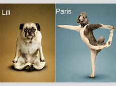 Cute and Funny Yoga Dogs and Cats, Let's Stretch
