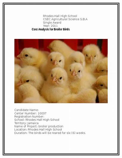 Sba Outline Poultry Academia Doc
