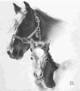 horse pencil drawing | Pencil Art | Pinterest