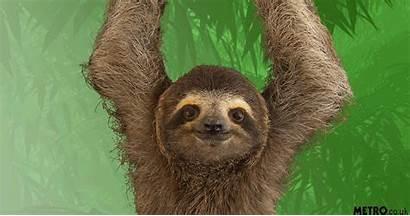 Sloths Sloth Sunday Metro