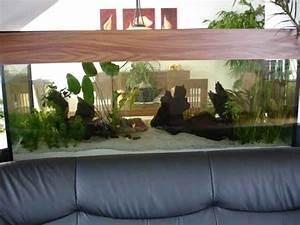 Aquarium Als Raumteiler : am anfang war der platz oder mein neues becken aquarium ~ Michelbontemps.com Haus und Dekorationen