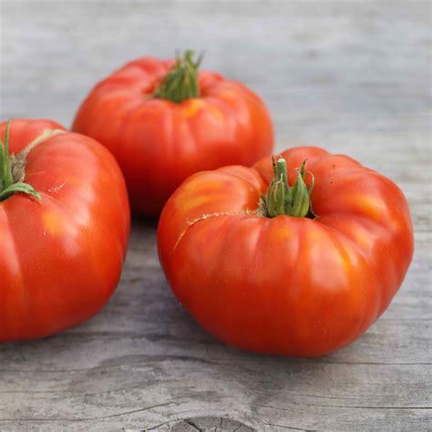 tomate russe ab ferme de sainte marthe