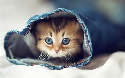 Animal Wallpapers Animals Adorable Cutest Cat Sweet