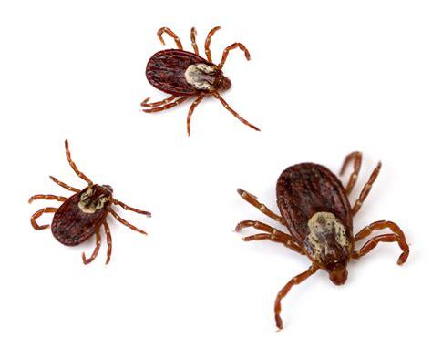 greenville tick mosquito control   good