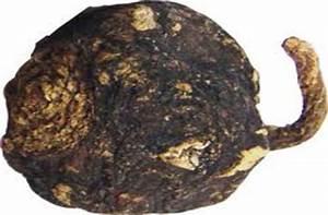 Maca negra - la maca con pigmento que la enriquece