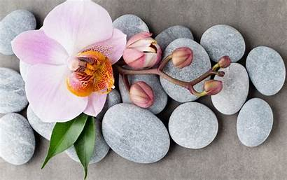 Orchids Spa Stones Pink Flowers Tropical Wallpapers
