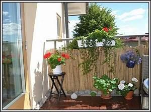 Bambus Auf Balkon : bambus auf dem balkon pflege balkon house und dekor galerie elkgrqyra7 ~ Eleganceandgraceweddings.com Haus und Dekorationen