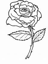 Coloring Rose Pages sketch template