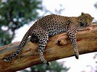 Wild African Safari Animals