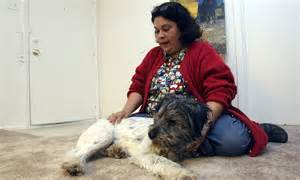 blind can be study finds daily mail blind finds its way back home to his owner just days