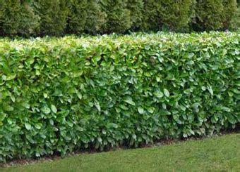 hedge bushes types 5 best types of hedging for shelter hedging ie outdoors pinterest gardens landscape