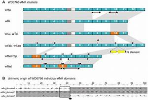 Repetitive DNA sequences and ankyrin repeat domain number ...