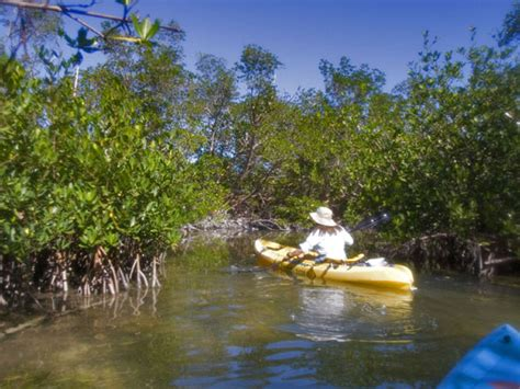 Hammocks State Park Reviews by Curry Hammock State Park South Florida Finds