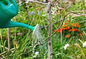 Bäume Beschneiden Jahreszeit : b ume im garten obi anleitung ~ Yasmunasinghe.com Haus und Dekorationen