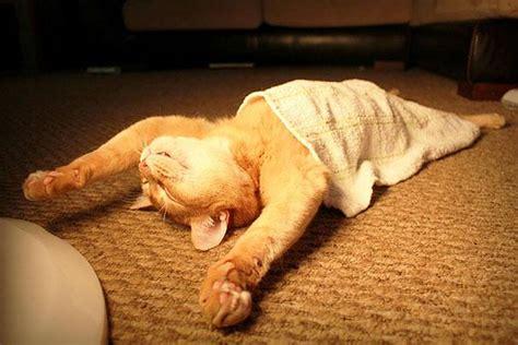 30 Cats Who Have Mastered The Art Of Sleepfu Seenox