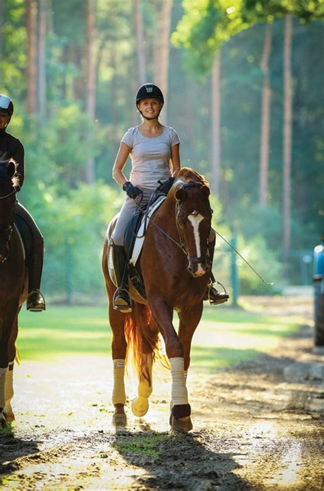 summer health precautions  dressage horses dressage today