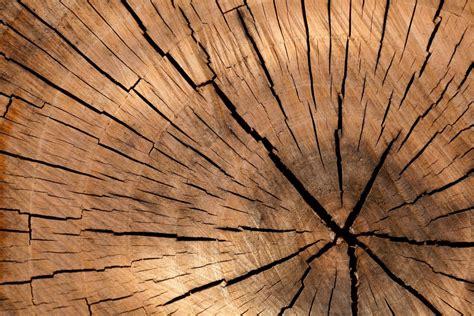 Welches Holz Für Tischplatte by Tischbeine Startseite Tischbeine Info