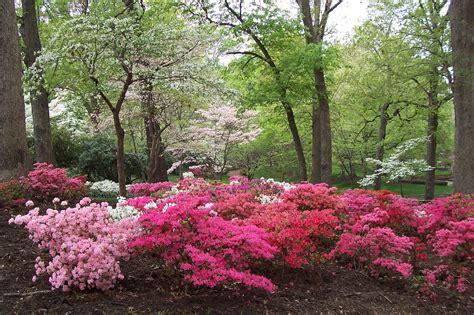 Beautiful Spring Scenery Wallpaper Wallpapersafari