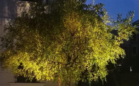 Illuminazione Per Piante Illuminazione Per Alberi Illuminazione Alberi
